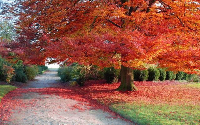 Hình ảnh đẹp thơ mộng lãng mạn về thiên nhiên 10