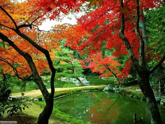 Hình ảnh đẹp thơ mộng lãng mạn về thiên nhiên 9