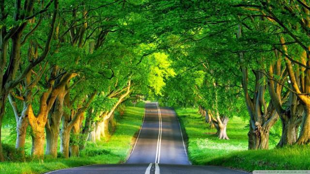 Hình ảnh đẹp về cảnh sắc thiên nhiên 4