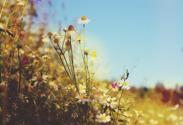 Hình ảnh đẹp về thiên nhiên bốn mùa 10