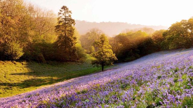 Hình ảnh đẹp về thiên nhiên bốn mùa 14