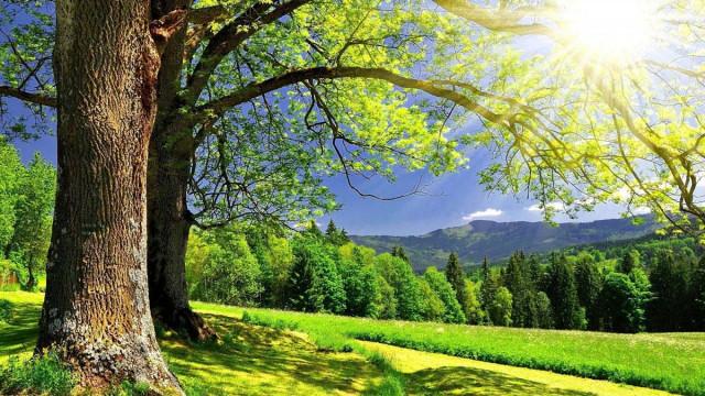 Hình ảnh đẹp về thiên nhiên bốn mùa 16