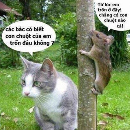 Hình ảnh troll hài hước nhất mà tôi từng thấy!