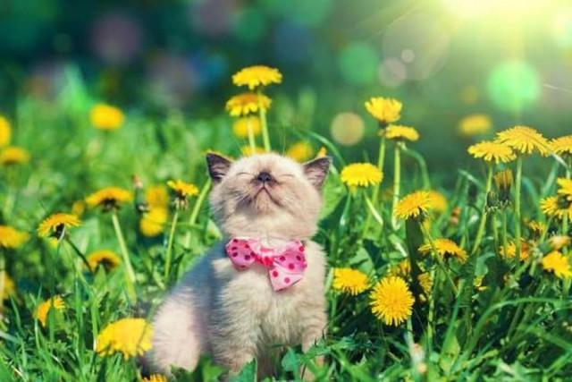 101 Hình Ảnh Mèo Con Dễ Thương Nhất Thế Giới