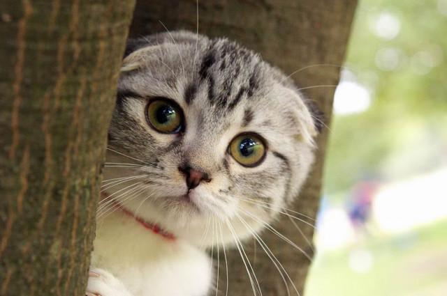 Hình ảnh những con mèo đáng yêu và dễ thương nhất