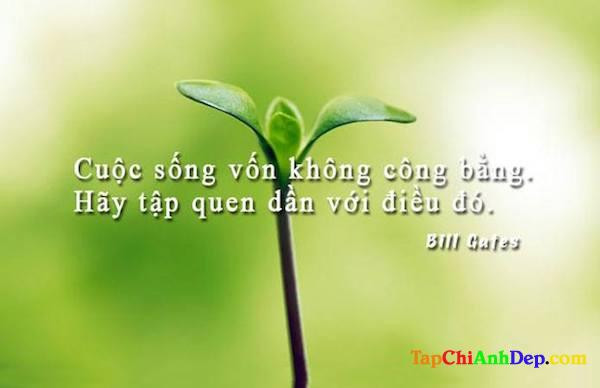 Nhung Cau Danh Ngon Cuoc Song Hay Va Y Nghia Nhat1 1