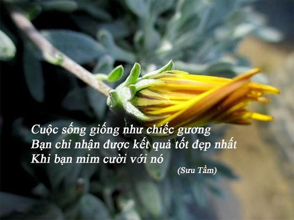Nhung Cau Danh Ngon Hay Nhat Ve Cuoc Song Hang Ngay 1
