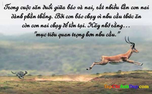 Nhung Cau Noi Hay Ve Cuoc Song Hang Ngay3 4