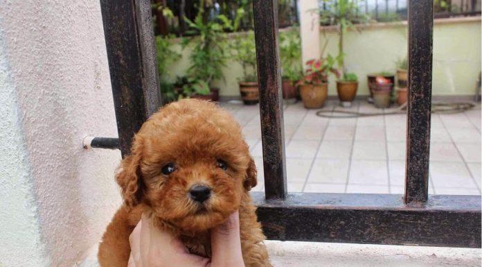 Hình ảnh các chú chó siêu dễ thương. (Nguồn: Internet)