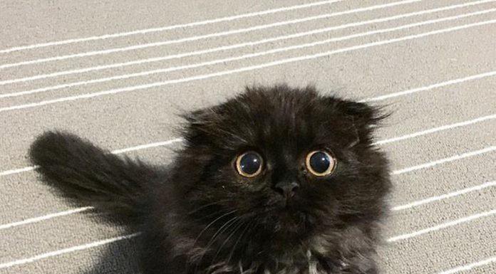 các hình ảnh mèo con cute dễ thương. (Nguồn: Internet)