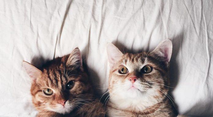 những tấm ảnh dễ thương cute về các bé mèo. (Nguồn: Internet)