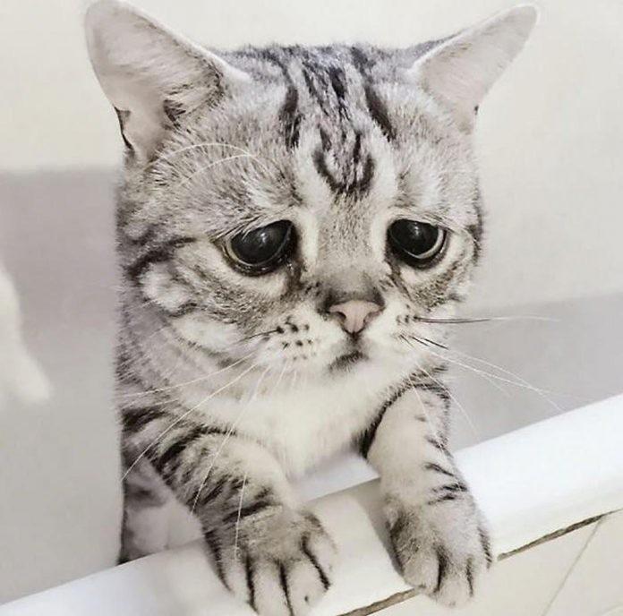 365+ hình ảnh dễ thương nhất quả đất: Nguyện chết trong sự dễ thương này! avatar dễ thương avatar đôi baby dễ thương cặp đôi chó dễ thương đáng yêu điện thoại đồ vật dễ thương đơn giản hình ảnh hình ảnh dễ thương hình ảnh đáng yêu hình baby dễ thương hoạt hình mặt trời mèo dễ thương tình yêu